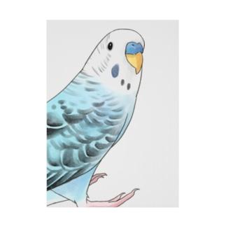 振りむきセキセイインコちゃん【まめるりはことり】 Stickable poster