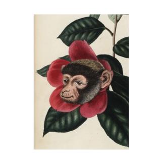 絶滅危惧種の猿とツバキ 吸着ターポリン