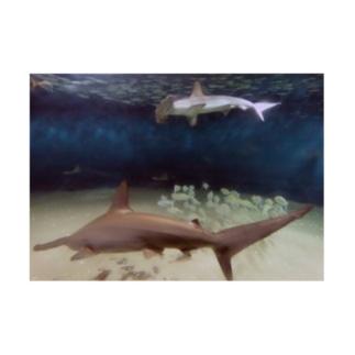 水中写真:シュモクザメと魚たち Hammerhead sharks & fishes Stickable poster