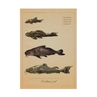 魚類画帳(淡水魚) 吸着ターポリン