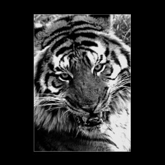 308GTBooの虎 Stickable tarpaulin