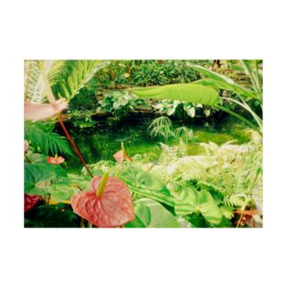 Kelfoy.の植物園 Stickable tarpaulinの横向き