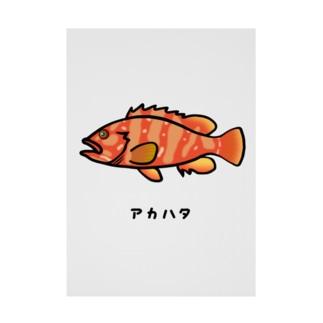 脂身通信Zの【魚シリーズ】アカハタ♪2107 Stickable poster