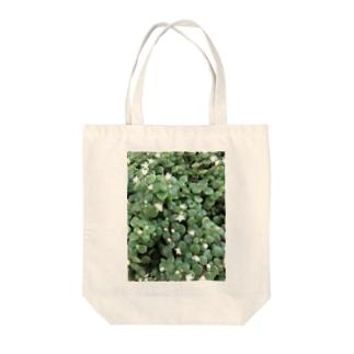 多肉植物♡ブロウメアナ Tote bags