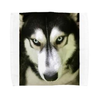 THE ハスキー Towel handkerchiefs