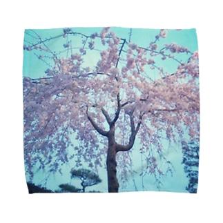 枝垂れ桜 Towel handkerchiefs