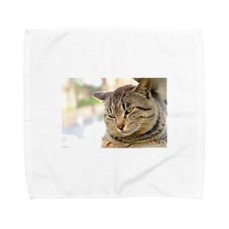猫のファンサービス Towel handkerchiefs