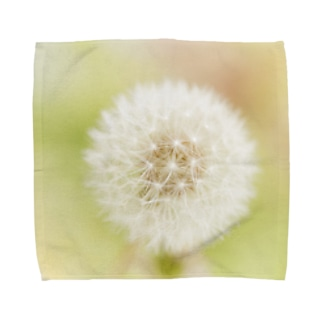 Ushun/DANDELION Towel handkerchiefs