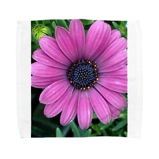 パープルフラワー Towel handkerchiefs