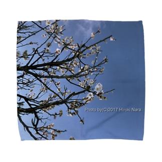 光景 sight738 梅  花 FLOWERS タオルハンカチ