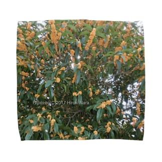 光景 sight740 キンモクセイ 金木犀 花 FLOWERS 壁紙 タオルハンカチ