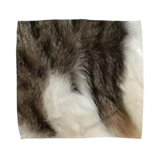 綾四季/猫の毛柄004 Towel handkerchiefs