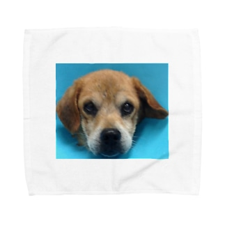タローちゃん Towel handkerchiefs