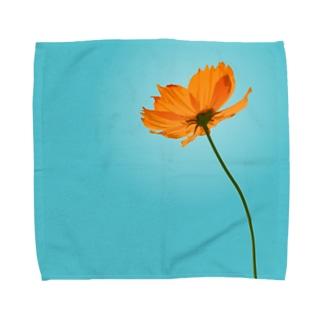 キバナコスモス Towel handkerchiefs