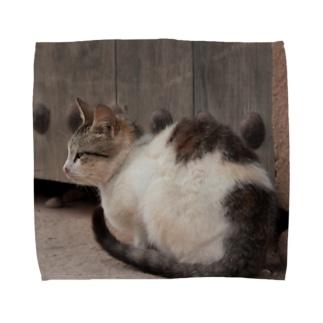モロッコの猫 Towel handkerchiefs