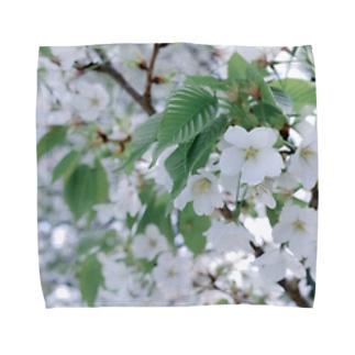 白い花 Towel handkerchiefs