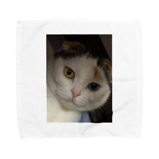 幸運な猫 タオルハンカチ