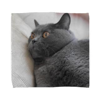 団子の猫2 Towel handkerchiefs