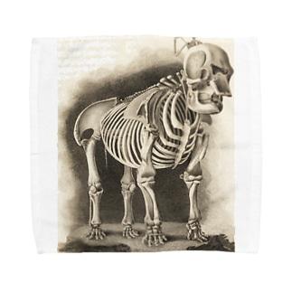 銅版画による人体骸骨 Towel handkerchiefs