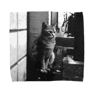 冬猫さん Towel handkerchiefs