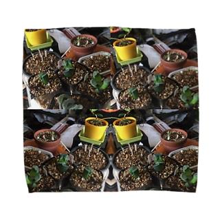 グリーンアート Towel handkerchiefs