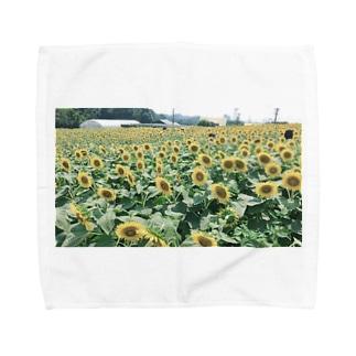 クロップトゥクロットの満開のひまわり Towel handkerchiefs
