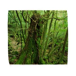 屋久島の苔むす世界 Towel handkerchiefs