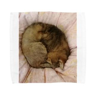 家の猫アンモナイト型 Towel handkerchiefs
