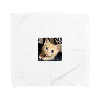 可愛い猫ちゃん💓 Towel handkerchiefs