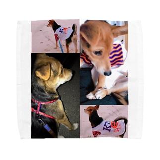 飼い犬のわんちゃん💓 Towel handkerchiefs