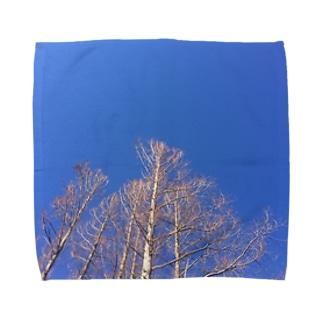 晴れた日のメタセコイア Towel handkerchiefs