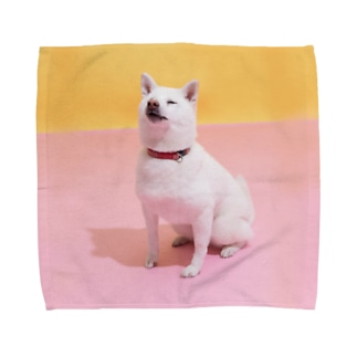 タオルハンカチL 白柴「我輩は犬である」 Towel handkerchiefs