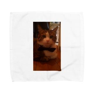 めちゃかわ猫 Towel handkerchiefs