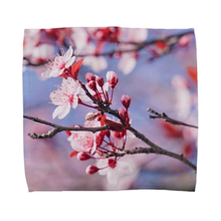 Sakura en France. Towel handkerchiefs