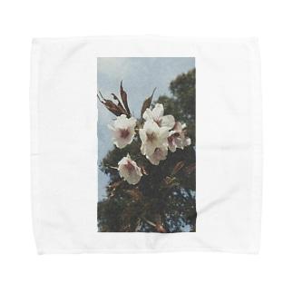 Sakura Towel handkerchiefs