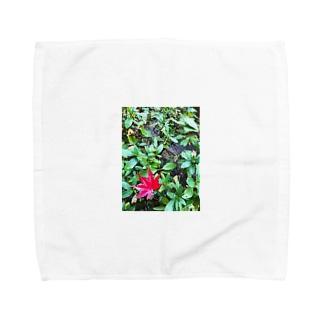 モミジ Towel handkerchiefs