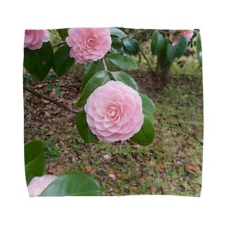 Pale pink camelia blooming カメリア Towel handkerchiefs