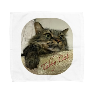 Tabby Cat Towel handkerchiefs