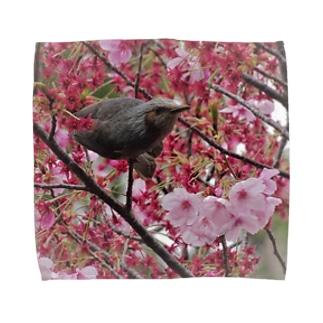 桜とヒヨドリ Towel handkerchiefs
