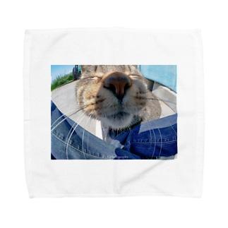 魚眼越し猫ちゃん Towel handkerchiefs