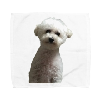 doggy003 Towel handkerchiefs