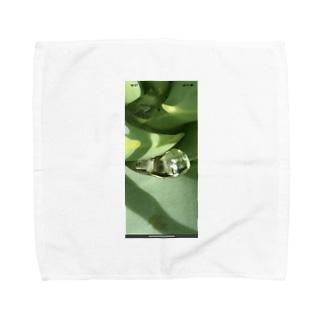 アロエ Towel handkerchiefs