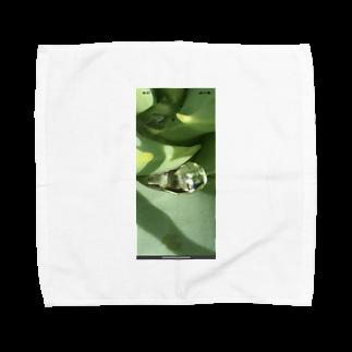oinarikozouのアロエ Towel handkerchiefs