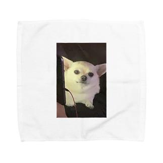 チワワチワワ Towel handkerchiefs