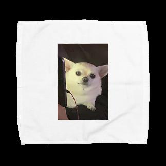 sherzofaneyのチワワチワワ Towel handkerchiefs