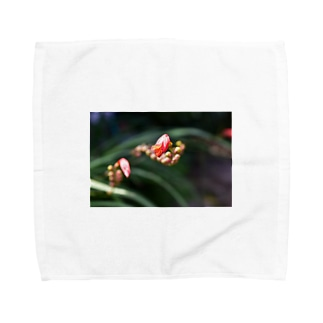 花 Towel handkerchiefs