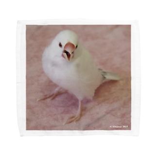 かっこいい白文鳥 Towel handkerchiefs