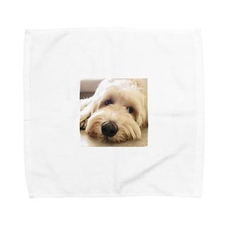 ラブラドゥードル Towel handkerchiefs