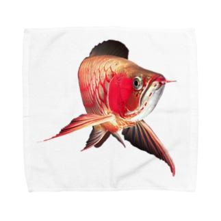紅龍(アジアアロワナの一種) Towel handkerchiefs