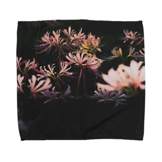 【花途夢】リコリス② Towel handkerchiefs